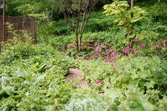 Blueberry path in june. Lindas trädgårdsblogg