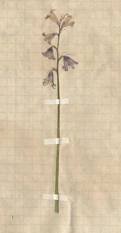 grid paper, tape, pressed plant/flower