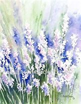 """Summers Delight by Catherine Sickafoose Limited Edition Watercolor Giclée ~ 9"""" x 7"""""""