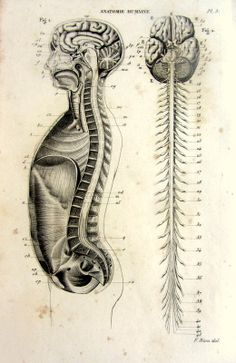 Antique victorian anatomy print rare nervous by LyraNebulaPrints, $23.95