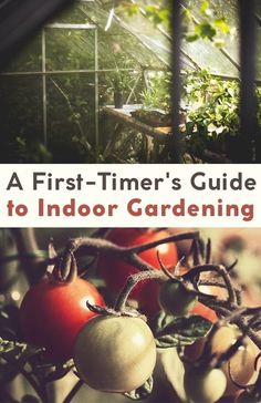 Ayear-round outdoor garden is not an option for everyone, especially for those who live in areas with long cold winters or no access to garden space. Luckily, there are many options for indoor gardening!