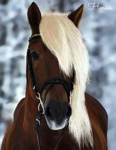 Rocky Mountain horse-such a pretty red chocolate