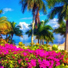 Beautiful blooms at #useppa #beautiful #blooms #beachflower #bluesky #bluewater #palmtrees #islandparadise #privateisland #islandgirl #staysalty #saltwater #islandlife #mermaid #oceanlove #wildchild #pureflorida #lovefl #sanibelgirl #sanibelstar #captiva #captivaisland #sanibelisland #bocagrande #pineisland #sanibel #sanibelisland #marcoisland #naples #bougevvilla