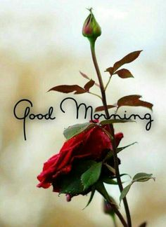In today's post, we are going to present romantic good morning quotes and messages. If you are looking for romantic good morning quotes and messages, then you have come to the right place. Good Morning Beautiful Images, Good Morning Images Hd, Good Morning My Love, Good Morning Texts, Morning Morning, Good Morning Flowers, Good Morning Picture, Good Morning Greetings, Good Night Image
