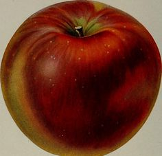 "Image from page 126 of ""[Fruit culture]"" (1912) 