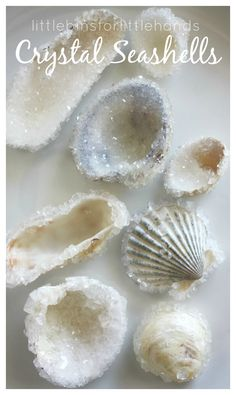 Jewelry Making Shells Crystal shells seashells science activity borax crystal growing - This season try a crystal seashells borax crystal growing science experiment! A fun chemistry experiment and science craft in one. Summer science for kids! Crafts To Make, Kids Crafts, Craft Projects, Arts And Crafts, Kids Diy, Craft Ideas, Diy Ideas, Beach Crafts For Kids, Decorating Ideas