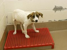 HELP ME I HAVE 17 SHARES AND NO PLEDGES AT ALL HELP HELP I NEED YOU TO HELP SAVE ME NOW    URGENTS @ GWINNNETT, GEORGIA ❤PLEASE SHARE / TAG / RESCUE / FOSTER / ADOPT ! HELP SAVE !❤Rescues , adopters and crossposters need to help get more assistance here to give all of the pets a chance. Please post any questions you have directly under the         dogs picture....we do not check for questions here that often...just under each dogs picture. Thanks!
