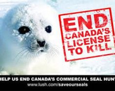 Stop the Canadian seal hunt!