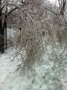 TORONTO ICE STORM - 26 HOURS WITH NO ELECTRICITY & NO HEAT