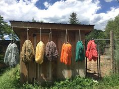 This was one of the busiest month's we've had at the dye pots in years! Our chicken coop even turned into a cooling station when we were dyeing July's Churro Club colors!