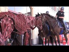 Joey, of WarHorse, meets Providence Mounted Command horses Sardelli and Adonis in front of the Providence Performing Arts Center. Animal Magnetism, Worlds Of Fun, Puppets, Equestrian, Youtube, Meet, Horses, Beautiful, Potato