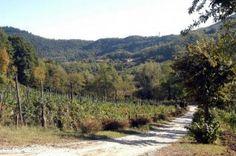 Il vino rosso dei Colli Euganei #wine