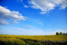 Mustard fields and endless sky. Southern Denmark  http://www.photographybykeyra.com/