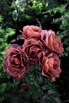 A lovely bundle of roses in London during summer. I was walking around looking for a good shot and I found this. Rose Pictures, Beautiful Pictures, Rose Bouquet, Amazing Art, Flower Power, Landscape Design, Planting Flowers, Bloom, Pretty