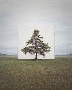 Yossi Milo Tree...#6