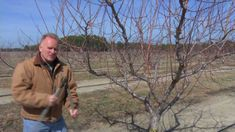 Pruning is a very important step in maintaining peach trees. Dr. Mike Parker, Tree Fruit Extension Specialist with the North Carolina Cooperative Extension S...
