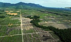 Tropical forests illegally destroyed for commercial agriculture