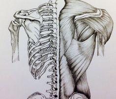 Back Bone/Muscle by BillyDoubleU.deviantart.com on @DeviantArt