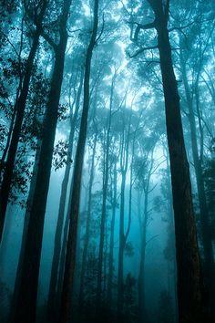 The Dandenong Ranges in Fog  by Jacqueline Barkla