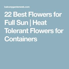 If you're searching for the best flowers for full sun then see our list of heat tolerant flowers. You can also grow them in containers. Summer Blooming Flowers, Full Sun Flowers, Amazing Flowers, All Plants, Growing Plants, Container Gardening, Gardening Tips, Lab, Florida Gardening