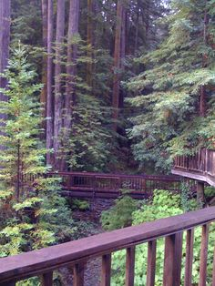 Go see the Redwoods, California California Travel, Northern California, San Francisco Girls Trip, Wonderful Places, Beautiful Places, Purple Mountain Majesty, Redwood Forest, Big Sur, Sacramento