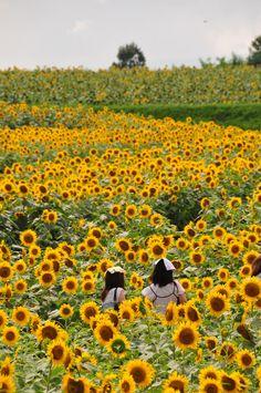Hokuryu-cho, Hokkaido, Japan: photo by tromboneimai