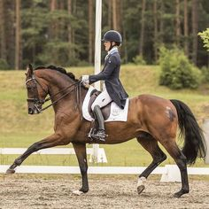 Just stunning #Repost @emilienyrerod Manuel @malinphoto.se @psofsweden @equalityline @lyckasridsport @pavofanclub #psofsweden #equalityline #equiline #roeckl #prestigesaddle #prestiged1 #samshield #lyckasridsport #dressage #horse #dressagehorse