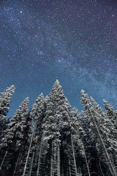Entre todos los lugares del mundo, los bosques ocupan un lugar de especial belleza. La sensación de naturaleza viva, el cambio de los paisa...