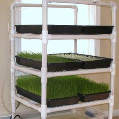 Garderning Hydroponic Secure and economical livestock feed by Sherry Willis. In this article, the author explains how to set up a low-cost, low-maintenance fodder system that will help offset the costs of feeding livestock. Aquaponics System, Fodder System, Aquaponics Diy, Hydroponic Gardening, Aquaponics Greenhouse, Hydroponic Growing, Greenhouse Growing, Urban Gardening, Urban Farming