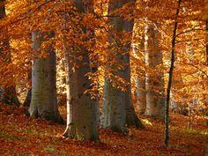 Foresta Umbra - Gargano