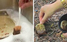 10 ottimi motivi per non buttare le bustine del tè – Pagina 5 – Casa Easy