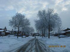 Winter Trees-1303-03-Weather