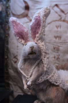 rat dressed as bunny - Google Search