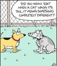 12 best dog cartoons images  cartoon dog funny dogs