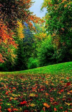 Beautiful Nature Pictures, Nature Photos, Amazing Nature, Pretty Pictures, Beautiful World, Beautiful Landscapes, Beautiful Places, Nature Nature, Imagen Natural