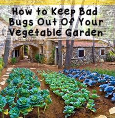 How to Keep Bad Bugs Out Of Your Vegetable Garden #organicgardening