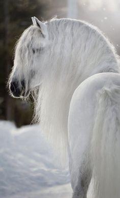 Snow White Horse