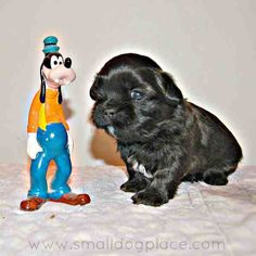 This Disney Dog Names list is perfect for that new pet if you are a fan of Disney movies or cartoons or you just love trivia Browse this extensive list of names to