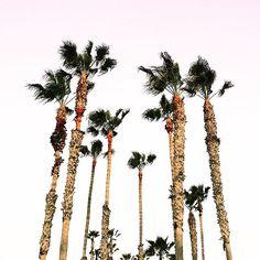 Got high hopes and an open road, breaking sky, no broken hearts ❤🚗 by leora_likes. mood #vacation #sunday #inspiration #travel #style #motivation #likeforlike #california #fashionista #girl #lifestyle #wanderlust #streetstyle #instagood #weekend #goals #beauty #instalike #l4l #beautiful #follow4follow #travelgram #f4f #la #20likes #fashionblogger #happy #like4like #fashion