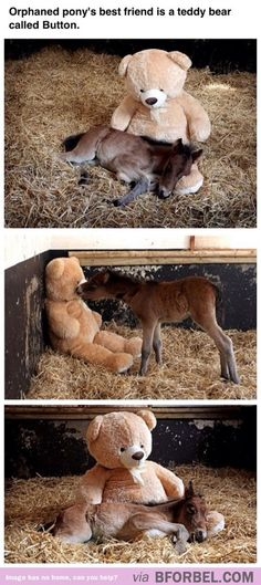Teddy Bear & Orphaned Foal. The sweetest thing.