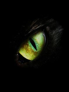 BlackCat green eyes