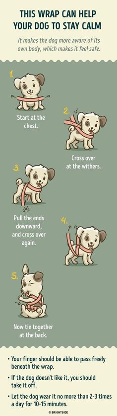 Tips And Tricks To Living With A Well-Behaved Dog >>> Click on the image for additional details. #TrainDog