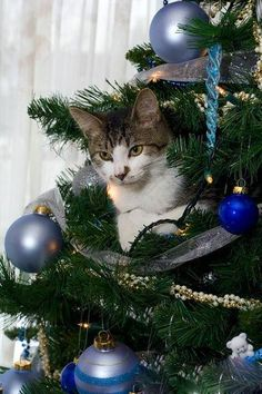 """* * """" Next year, yer usin' tinsel likes everyone   else."""""""