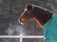 Are breathing problems standing in the way of an enjoyable ride? If your horse has respiratory issues, riding not only won't be fun, it might not be possible. Consider adding SmartBreathe Pellets, which combine herbs, MSM and other key ingredients to help support a normal inflammatory response and respiratory health. SmartBreathe Pellets in SmartPaks are Guaranteed to Work, so you can breathe easy giving them a try!