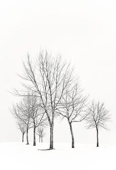 I used to drive by these trees everyday for work and never noticed them until today. Bracing for winter blizzard part deux and another snow day with the girls. Perspective, Winter Trees, Presentation, Photos, Explore, Architecture, Random, Outdoor, Art
