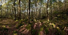 Ty Canol National Nature Reserve, Pemrokeshire, Wales