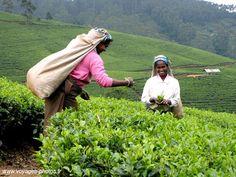 Google Image Result for http://www.ecoinstitution.com/green-news/wp-content/uploads/2010/10/sri-lankan-women-planting.jpg