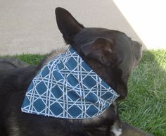 Extra Large Dog Bandana Tan Background with by lovelylovedesigns, $8.00