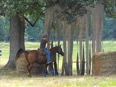 Image result for trail horse obstacles