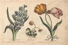 Oude Botanische Prenten : Beste afbeeldingen van oude kaarten en prenten greeting